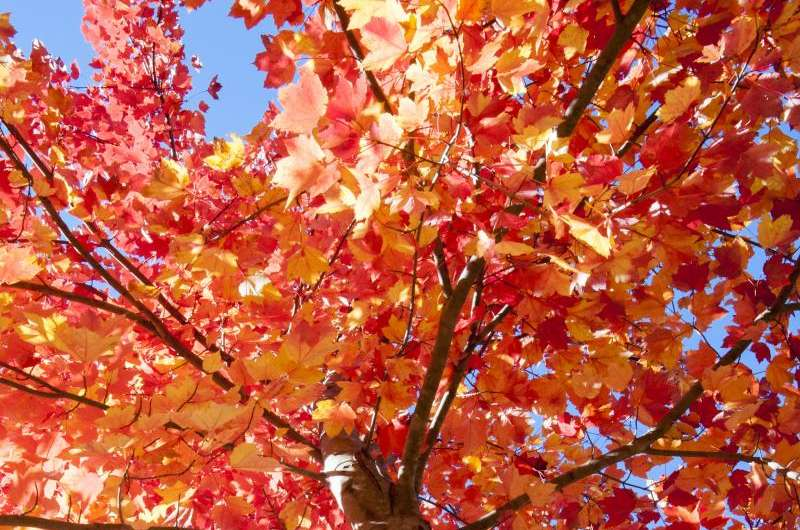Climate change could affect fall foliage timing