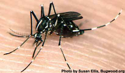 Researchers compare 'natural' mosquito repellents to DEET