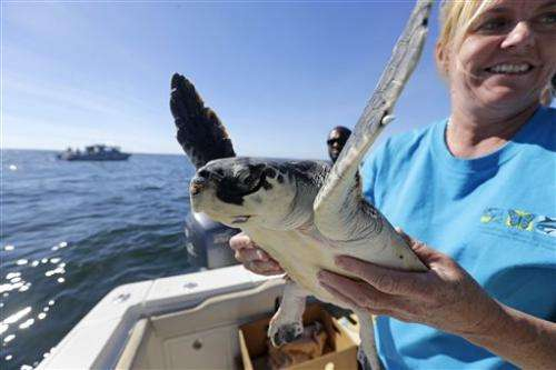 Cold-stunned turtles rehabilitated in New Orleans, released