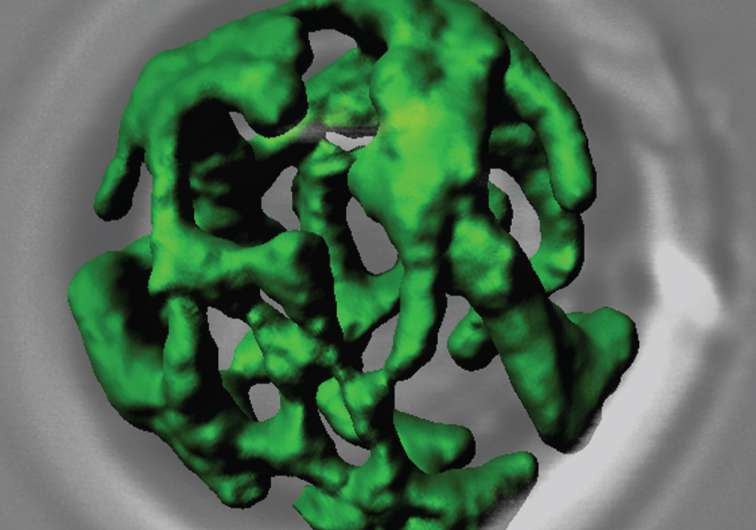 Researchers use artificial membranes to show how a particular protein reaches the mitochondria