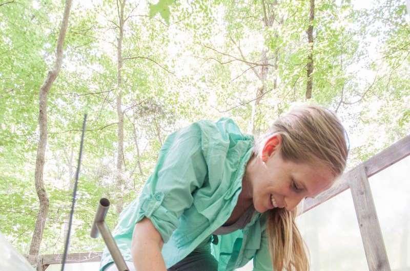 Researchers seek sneak peek into the future of forests