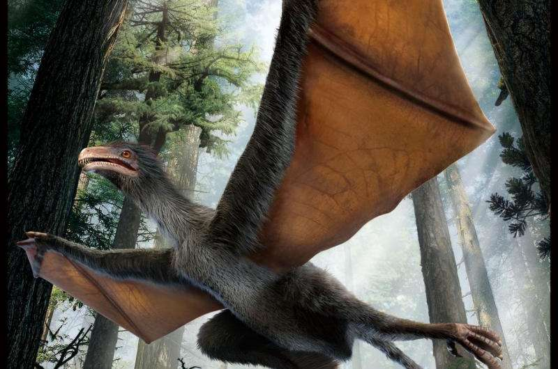 Weird-winged dino sets science world aflutter (w/ Video)
