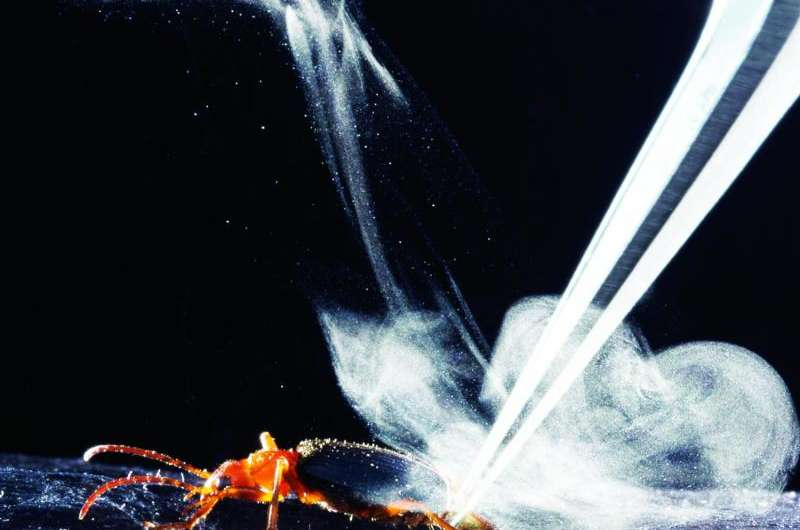 New analysis shows how bombardier beetles produce an explosive defensive chemical jet