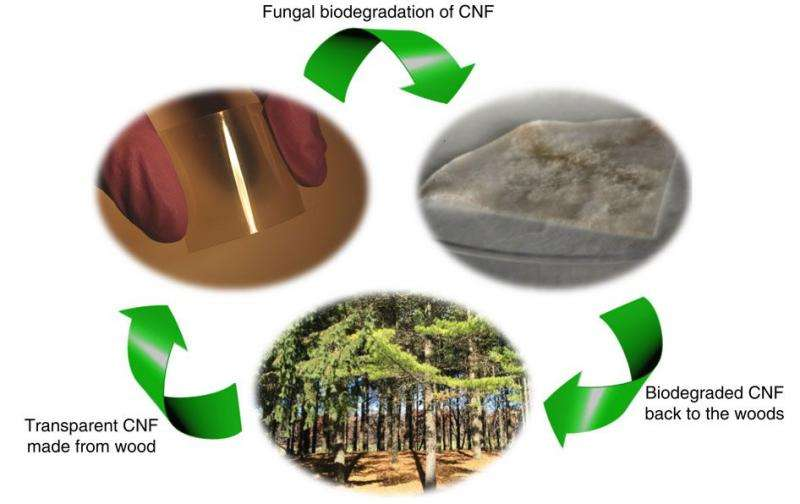 Research could lead to biodegradable computer chips