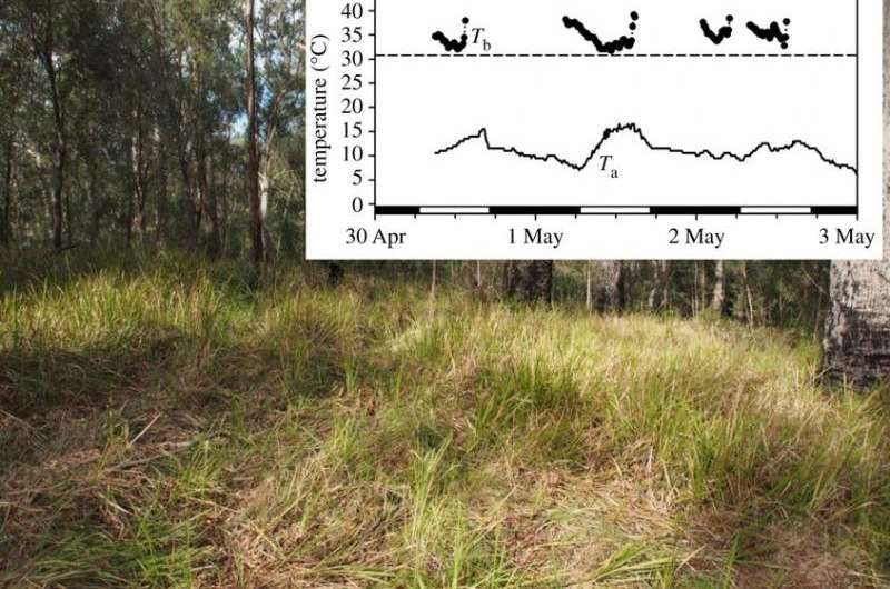Study shows example of mammal adapting to fires by increasing torpor time
