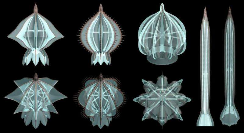New fossils show ancient comb jellies had skeleton parts
