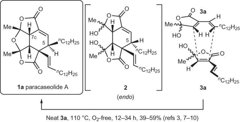 Researchers provide evidence for a non-enzymatic pathway to produce paracaseolide A