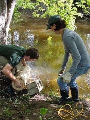 Basketmakers' tradition of storing black ash logs in water effective in killing EAB