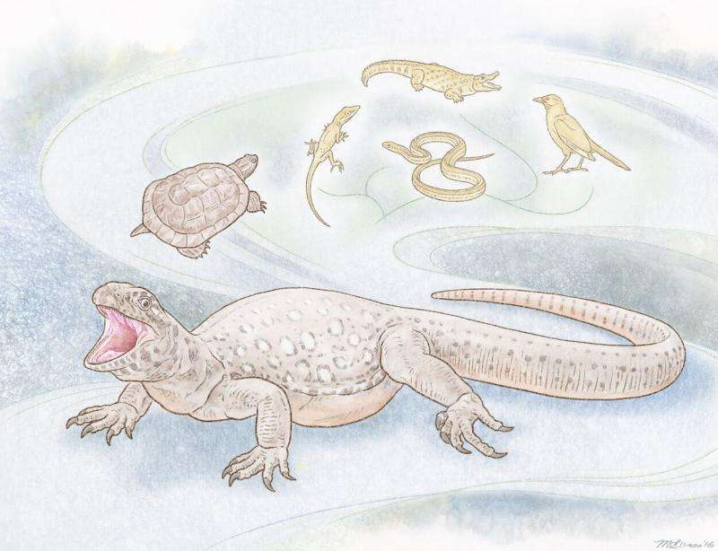 Scientists discover key clues in turtle evolution