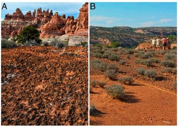 Long term study shows detrimental impact of climate change on drylands
