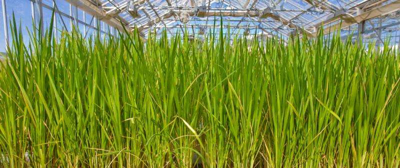Marginal soil can make for good biofuel crops