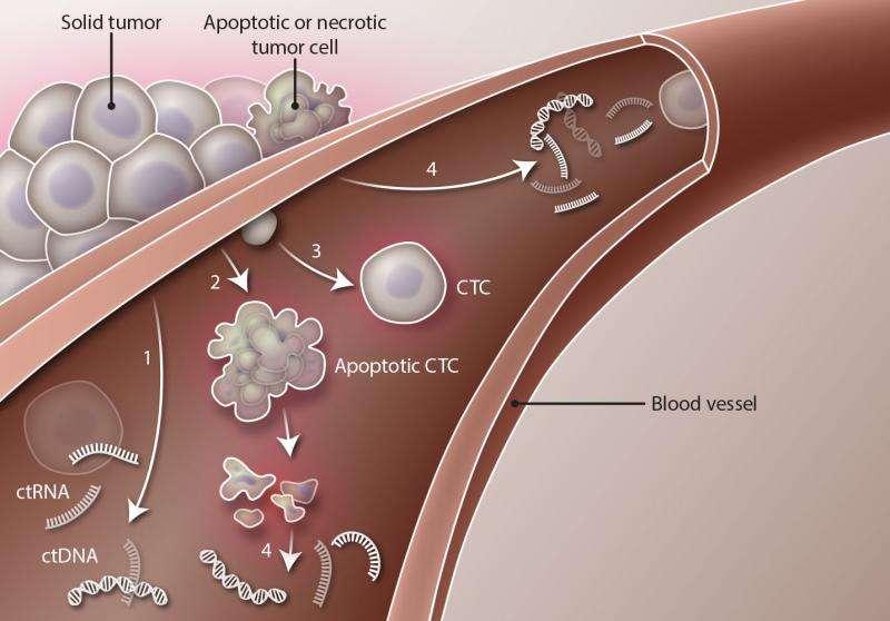 Blood test picks out prostate cancer drug resistance