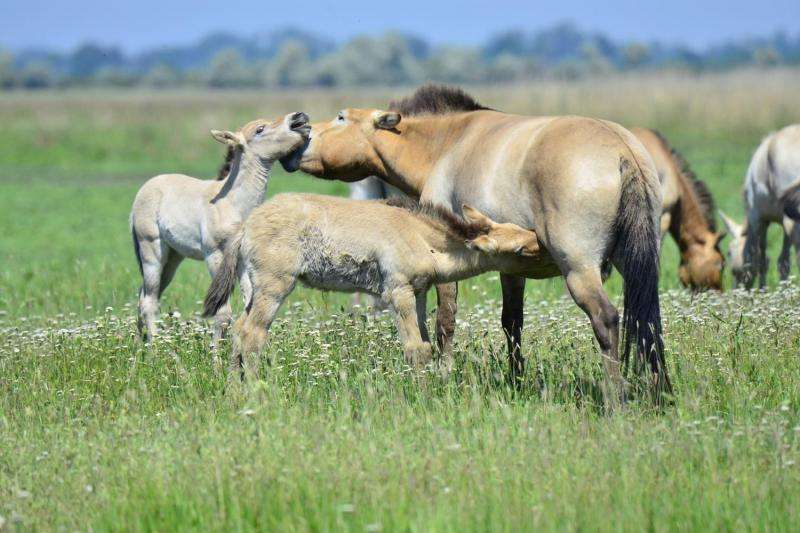 A horse of a different color: Genetics of camouflage and the Dun pattern