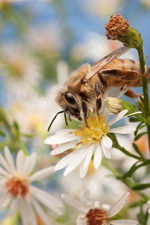 Research shows honey bee diseases can strike in all seasons
