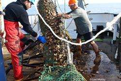 World's largest ever fishing impact study brings hope for Cardigan Bay Scallop fishermen