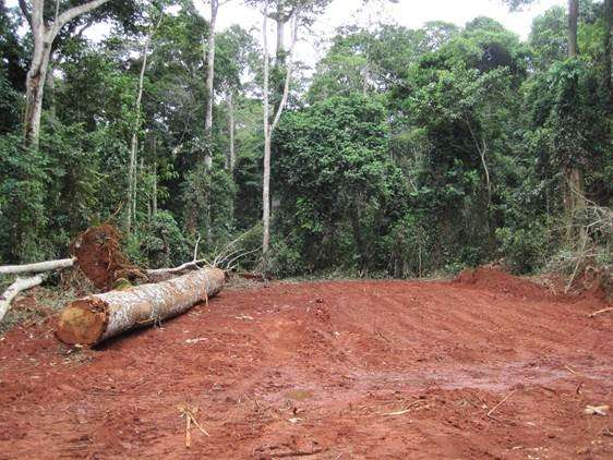 Researchers test sustainable forestry policies on tropical deforestation, logging