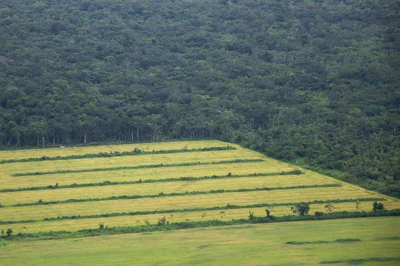 Researchers seek least destructive balance of agriculture vs. forests