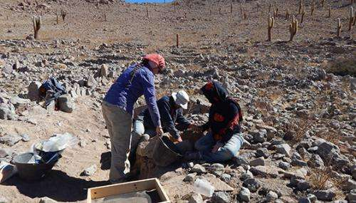 Researcher examines Atacama Desert farm fields abandoned 500 years ago