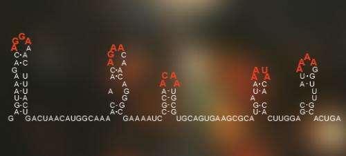 Scientists discover viral 'Enigma machine'