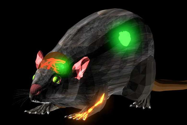 Scientists look deeper into the body with new fluorescent dye