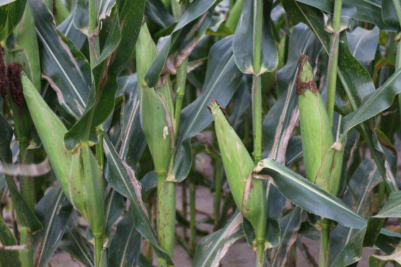 Study shows how crop prices and climate variables affect yield and acreage