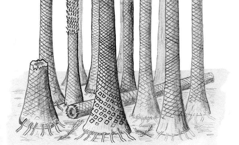 Ancient fossil forest unearthed in Arctic Norway