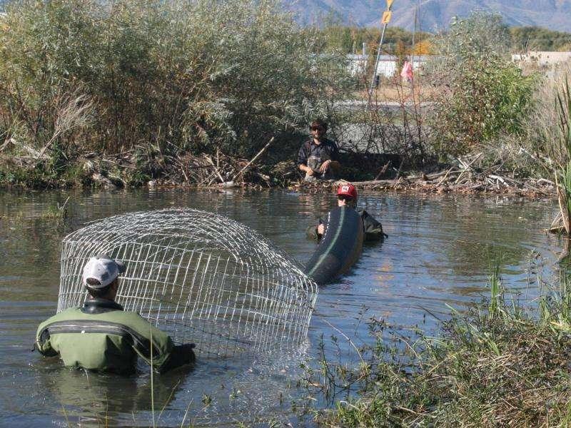Utah State University Researchers Install Pond Leveler at Beaver Dam on Walmart Store Property