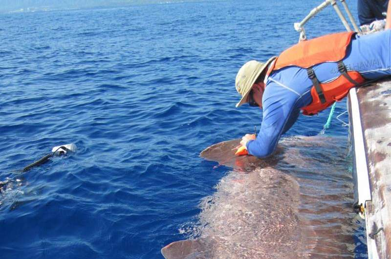 Researchers discover deep sea sharks are buoyant