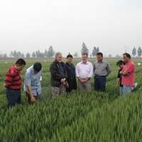 A century of spectacular wheat yield improvements in China