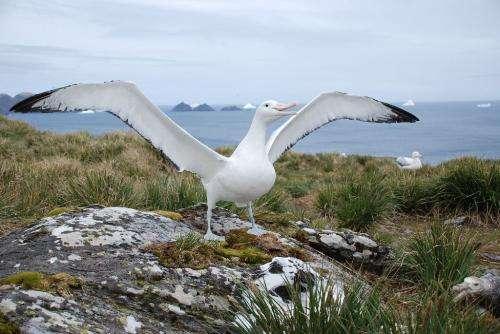 Age doesn't matter for foraging albatrosses