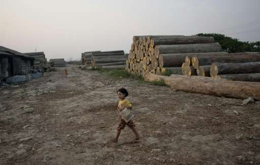 A girl carries a basket at a logging storage site on the outskirts of Yangon, Myanmar in 2014