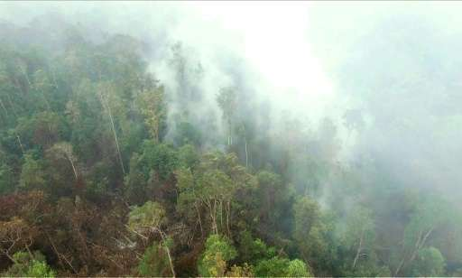 A grab from a Greenpeace video issued on October 6, 2015 shows fires burning around the edge of the Gunung Palung National Park