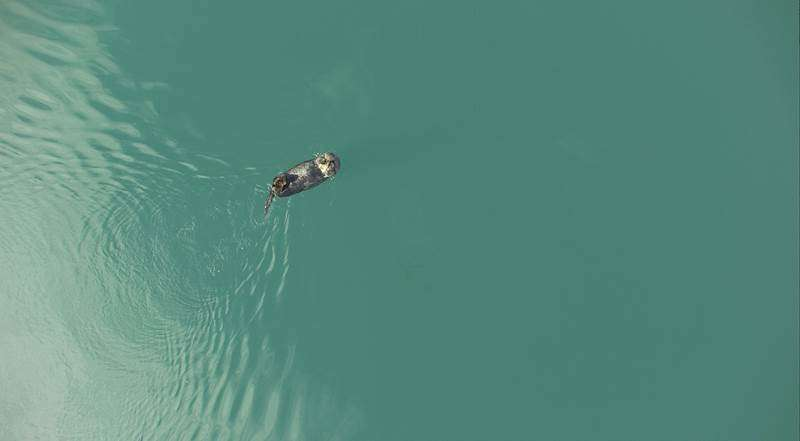 Alaska researchers study sea otters with unmanned aircraft