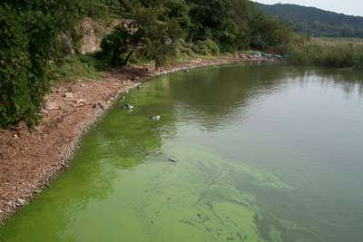 Algae blooms create their own favorable conditions, new study finds