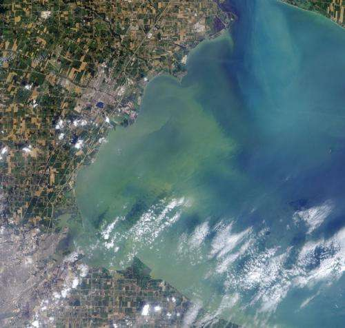 Algae from clogged waterways could serve as biofuels and fertilizer