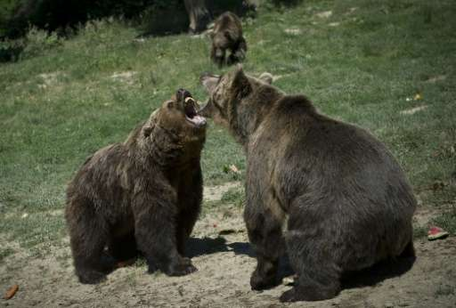 "All of the bears in the ""Libearty"" brown bear sanctuary have a ""sad but educational"" story"