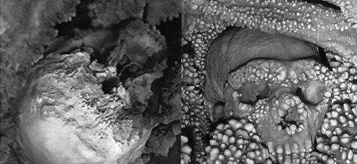 Altamura Man yields oldest Neanderthal DNA sample