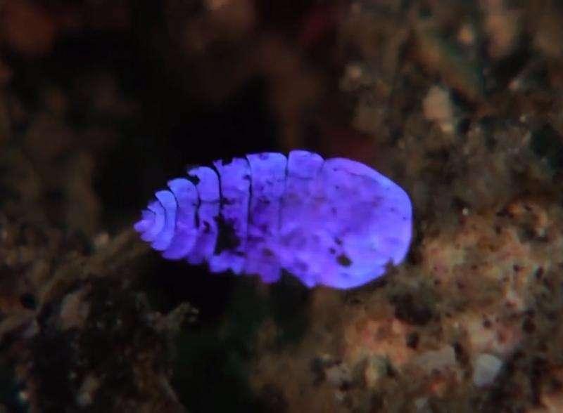 A marine creature's magic trick explained