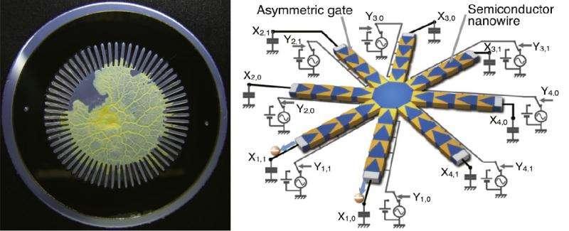 amoeba inspired computing
