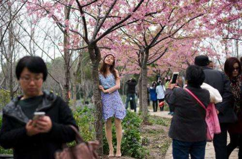 A mother takes a snapshot of her daughter in front of a tree during the Cherry Blossom Festival in Gucun Park in northern Shangh