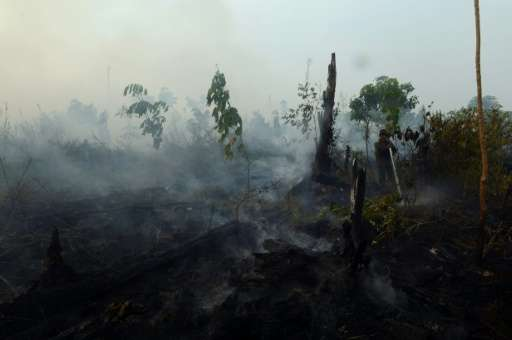 An area of forest smoulders at a palm oil concession in the Kampar district, Riau province on Sumatra island on June 29, 2013