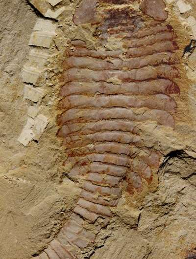 Ancient brains turn paleontology on its head