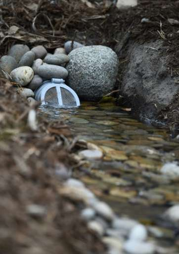 """A newly installed """"rain garden,"""" part of drought-alleviation measures in Los Angeles, helps storm overflow captured fr"""