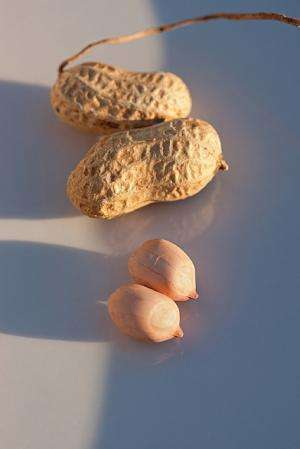 A new Spanish peanut variety for consumers, growers