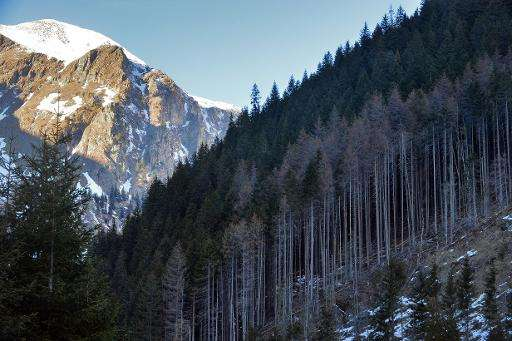 An illegally deforested mountain in Pojarna Valley in the Romanian Carpathian Mountains on January 16, 2014
