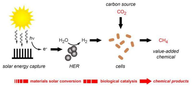 Another milestone in hybrid artificial photosynthesis
