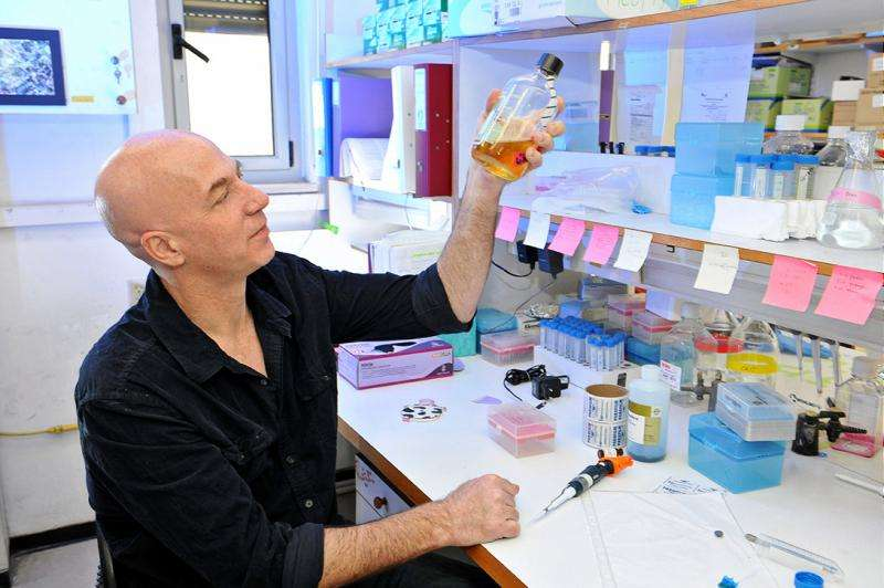 Antibody Holds Promise for Treatment of Type 1 Diabetes
