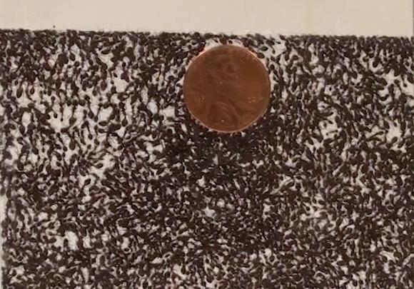 Ants: Both solid-like and liquid-like