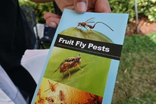 A pamphlet describing the Oriental fruit fly is distributed at an information booth on October 7, 2015 in Redland, Florida