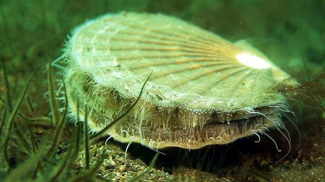 Arran reserve reveals marine protectionworks